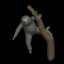 Little Sloth
